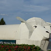 Large white corrugated iron iconic sheep building