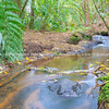 Small flowing stream through New Zealand bush.