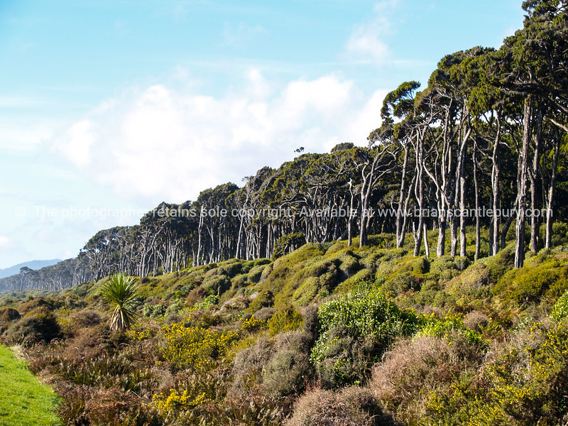 Stunning, where the typical native West Coast Bush meets the highway. South Island