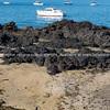 Rocky foreshore of harbor at Devonport.