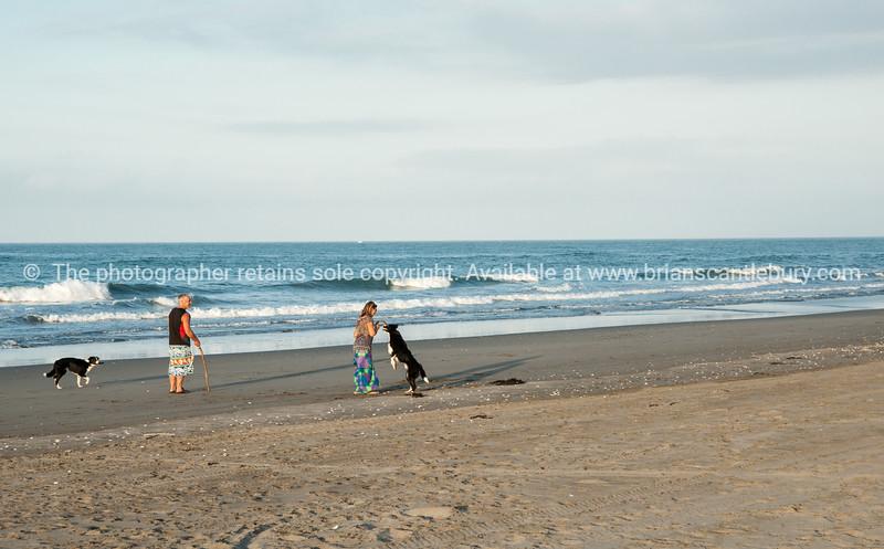 Walking the dog. East Coast. New Zealand Images.