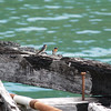 Welcome Swallows on Tokomaru Bay, East Coast. New Zealand images.