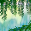 Green fern fronds framing defocused lake colours in background