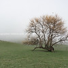 Ruralwinter landscape with leafless tree