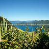 Queen Charlotte Sound, Marlborough. New Zealand images.