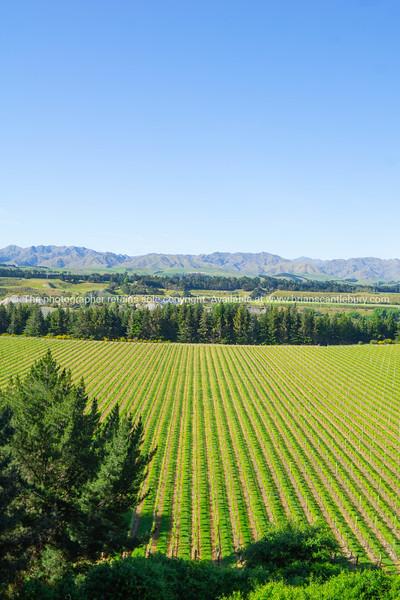 Landscape of Marlborough district