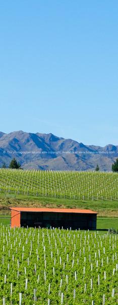 Vineyards in Marlborough