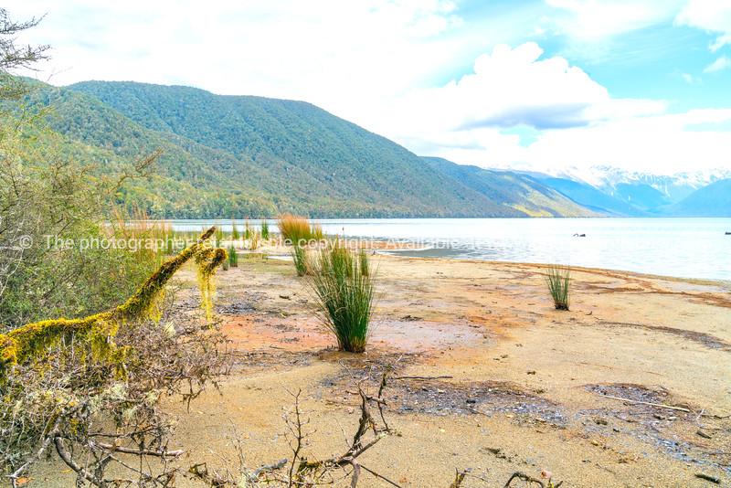 Lake edge with reeds, and bush