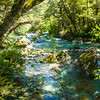 Turquoise water flows seductively through South Island forest