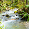 Forest stream though New Zealand natural bush