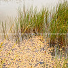 Reeds and algae in pong on Tora Walk. New Zealand Image.