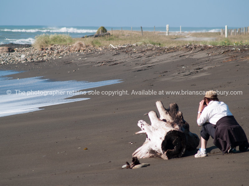 Tourist photographing, Tora Beach.  New Zealand images.