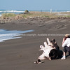 Tourist photographing, Tora Beach.  New Zealand images.