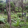 Tramping in New Zealand bush. New Zealand images.