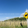 Cattle warning sign on rural road Greytown Wairarapa New Zealand