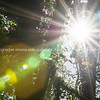 Sun lens flare s against dark backlit bush and trees