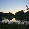Wetland, Awhitu Regional Park