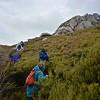 Climbing Bald Cone
