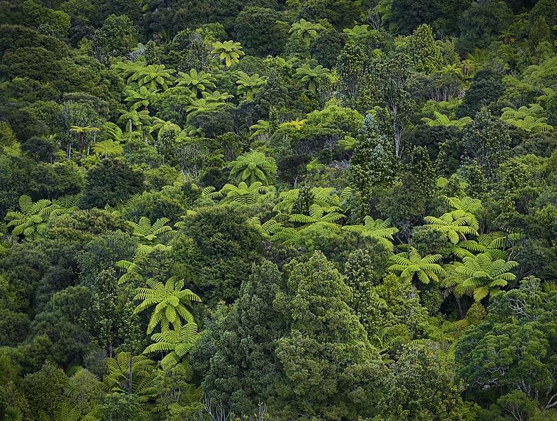 Waitakere Ranges Rainforest