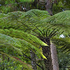 Waitakere Ranges Rainforest