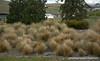 Grass at Lake Tekapo in New Zealand in November 2010