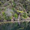 Lake Ohakuri- gorgeous