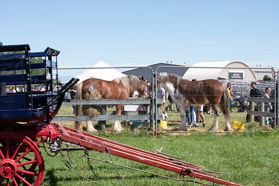 Christchurch  - The New Zealand Agricultural Show 15 November 2019 -  NZ-4