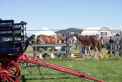 Christchurch  - The New Zealand Agricultural Show 15 November 2019 -  NZ-5
