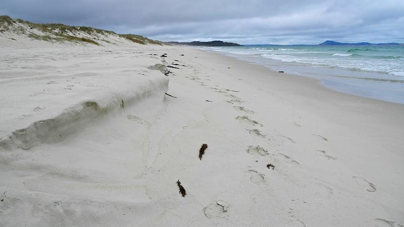 Puheke Beach on the Karekare Peninsular