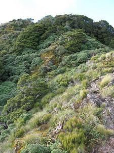 Rock steps just below Powell Hut
