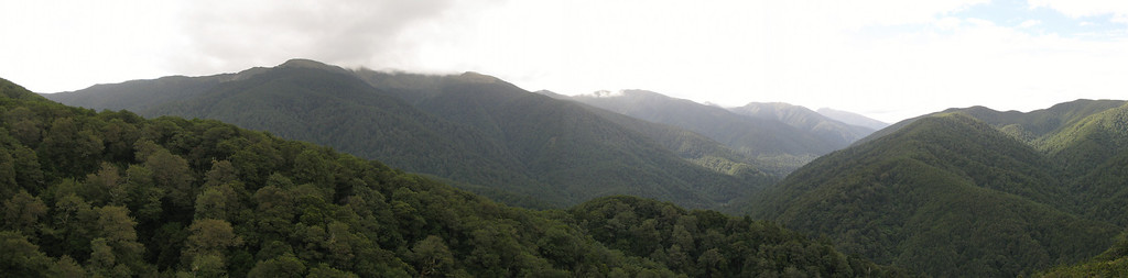 Mt Holdsworth in cloud - Powell hut to left just above bush line.