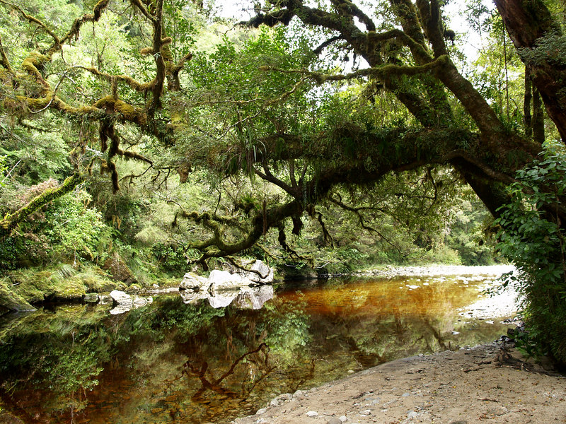 The Oparara River on the way to the Oparara Arch.
