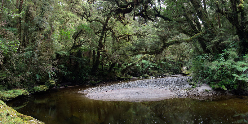 Oparara river near Honeycomb caves.