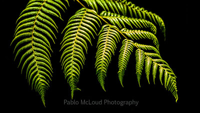 Fern Fingerlings
