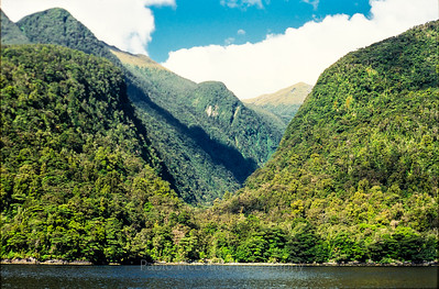 Doubtful Sound Oasis