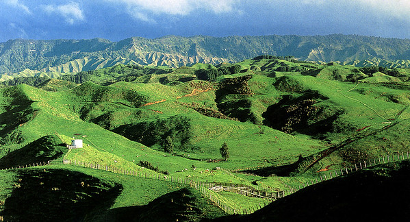 0990 - hillside near te kuiti volcano