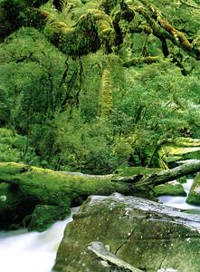 0838 - rain forest 02