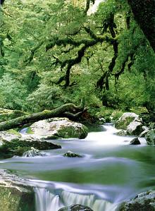 0837 - rain forest 01