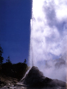 0824 - lady knox geyser at waiotapu thermal park