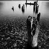 Meiklejohns Bay Black & White