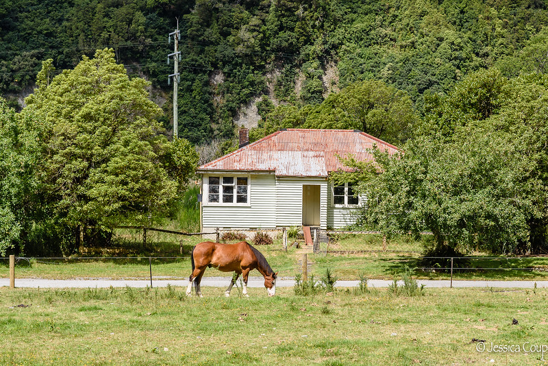 Horse in the Front Yard