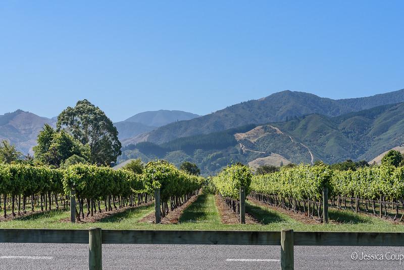 Passing the Vineyards