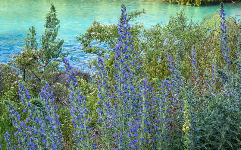 An Assortment of Wildflowers Overlooking the Clutha River, Wanaka NZ