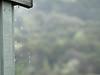 Raindrops 3, Abel Tasman Park