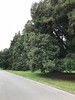 2018-03-06 - 16 Christchurch NZ botanic garden Big trees