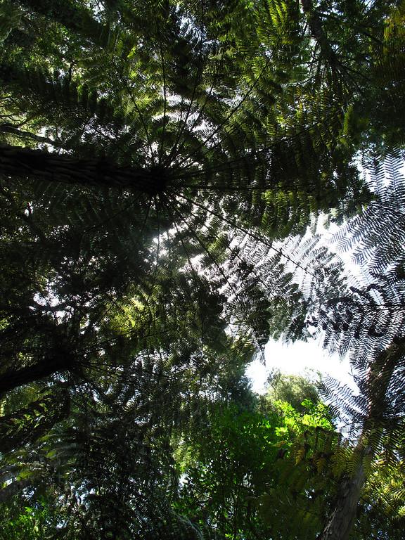 New Zealand vegetation