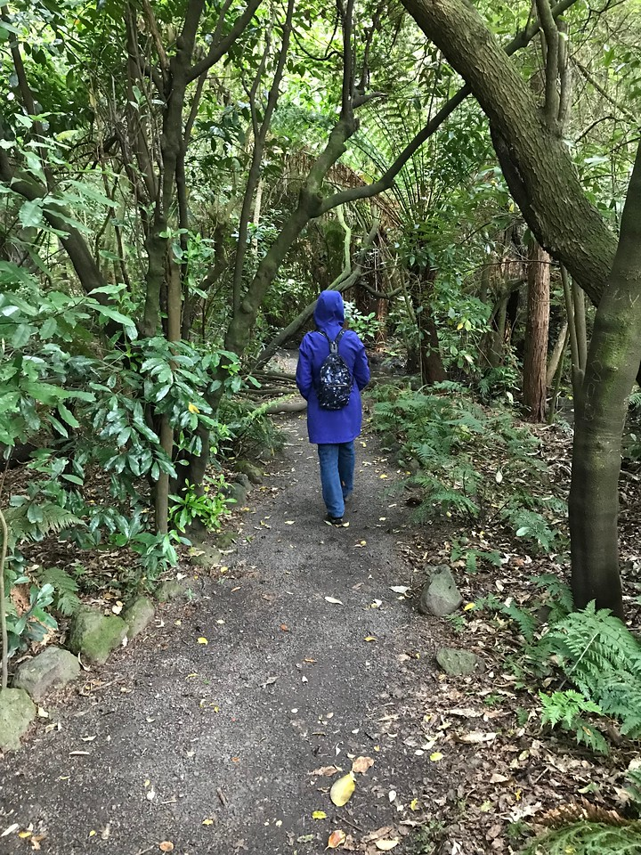 2018-03-06 - 24 Christchurch NZ botanic garden Rosemarie Oliver in NZ forest