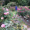 2018-03-06 - 19 Christchurch NZ botanic garden Roses