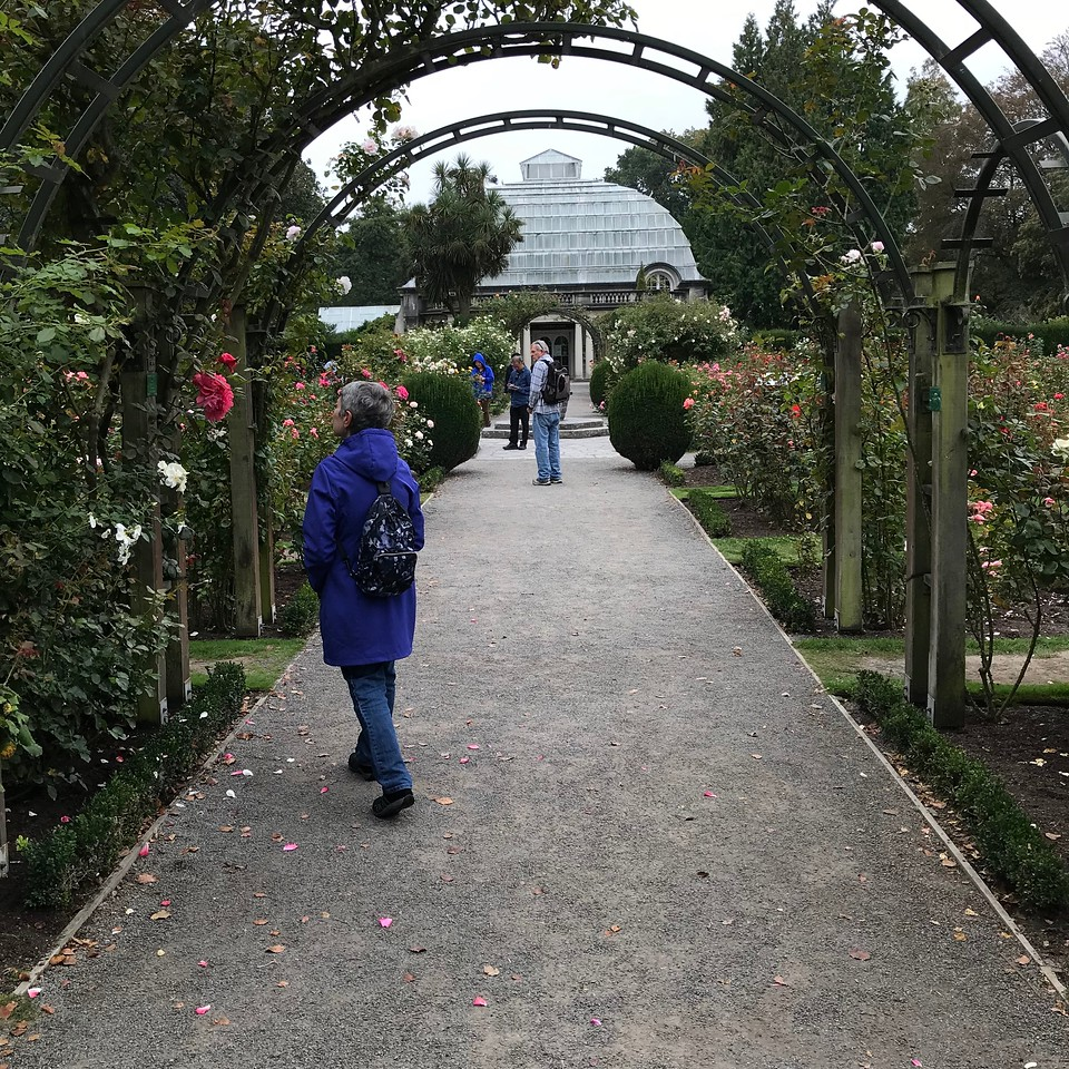 2018-03-06 - 18 Christchurch NZ botanic garden Roses