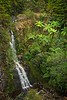 Waterfall with Tree Ferns